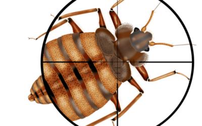 حملة القضاء على حشرة البق
