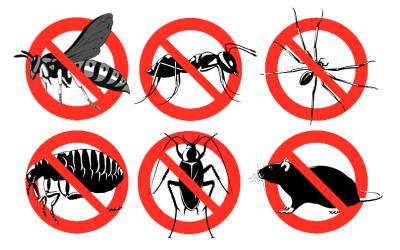 الحشرات المؤذية
