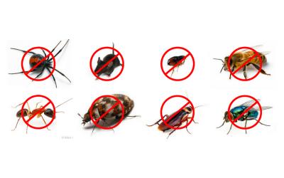 مكافحة الحشرات فى المطاعم